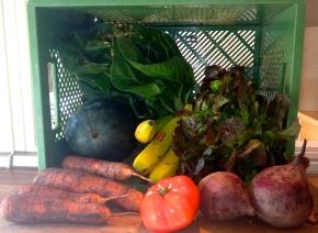 Gemüse und Obst aus der Bio-Kiste.