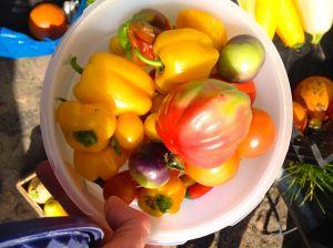 Frisch geerntet: Paprika, Tomaten, Chilis.